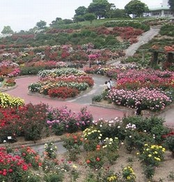 Parque de rosas