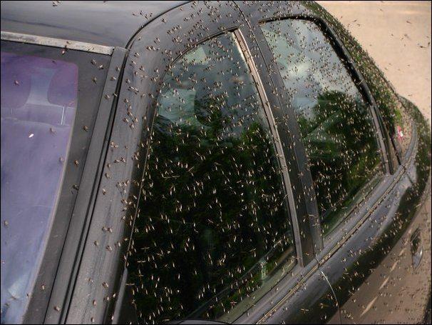 Chmara komarów 5
