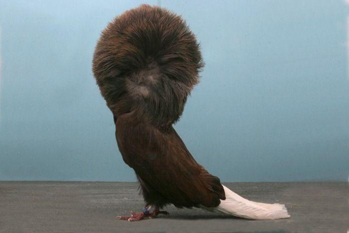 Nieco inne gołębie 6