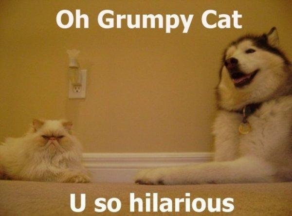 Śmieszne zdjęcia #114 88
