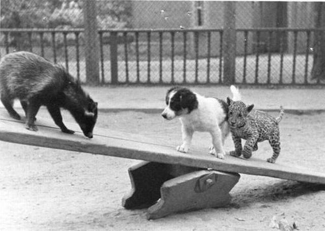Zabawne zwierzaki #32 52