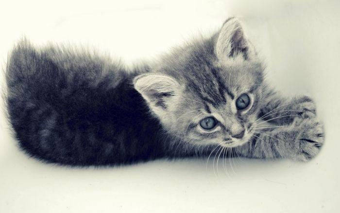 Słodkie kociaki 59