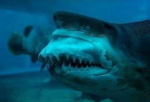 Szczęki rekina 3