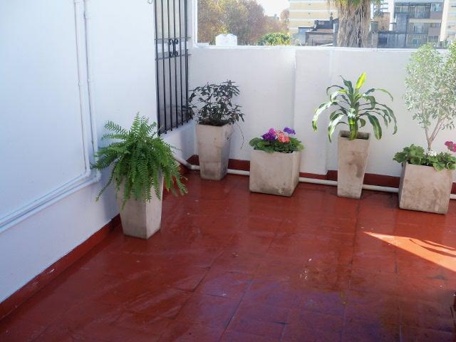 Foro de infojardn fotos de nuestras flores colores que for Pintura para pisos colores