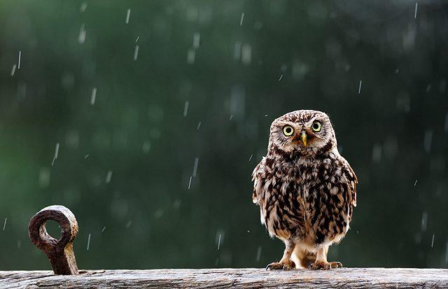 Świat w deszczu 32